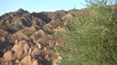 View of the colorful mountains of Danxia national park, seen behind twigs, China Stock Footage