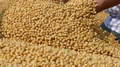 Freshly harvested soybean Stock Footage
