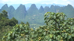 Karst mountain peaks visible behind fruit trees nearby Guilin in China Stock Footage