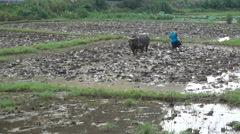 A farmer plows a muddy rice paddy field in a small village in rural China Stock Footage