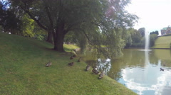 Ducks At The Pond In Dresden, Germany Stock Footage