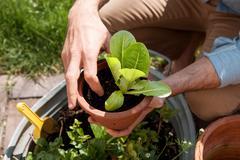 Man in garden tending to plants Stock Photos