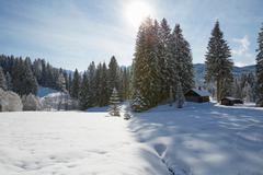 Fir trees and log cabin on snow covered landscape, Elmau, Bavaria, Germany Stock Photos