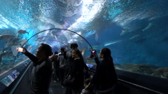 Chinese tourists visit underwater glass tunnel Shanghai Aquarium Stock Footage