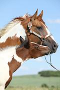 Paint horse mare with its foal Stock Photos