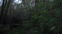 Scary forest at night, first-person view. Man goes on an eerie place in the Stock Footage