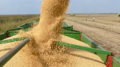 Combine harvester unloading soybean Stock Footage