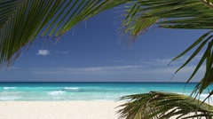 Tropical beach with coconut palm tree and white sand on coastline Stock Footage