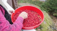 Farmer cleaning berries in the garden. Slow motion Stock Footage