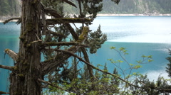 Old trees in front of beautiful blue lake of Jiuzhaigou national park in China Stock Footage