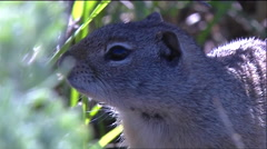 Squirrels in the forest. Stock Footage