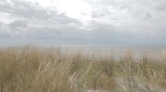 Frth. Grass waving in the wind. Cloudy sky. Stock Footage