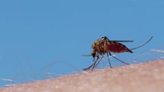 Mosquito blood sucking on human skin Stock Footage