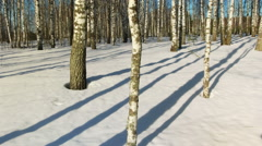 Sunny day in winter forest Stock Footage