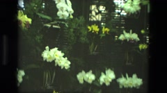 1972: a close up of flowers are seen which are multi coloured IRAN Stock Footage