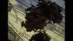 1972: a glass house, suitable for fragile, growing greenery, shows many plants, Stock Footage