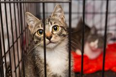 Little kittens in a cage of a shelter Stock Photos