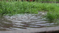 Close up of water dripping from a gutter into puddle in grass Stock Footage