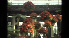 1972: flowers at the longwood gardens IRAN Stock Footage
