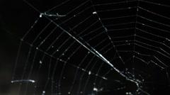 Alight spider web on the dark background Stock Footage