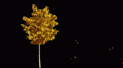 Blowing on the wind autumn yellow tree isolated with alpha Stock Footage