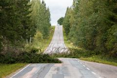 Fallen spruce trees laying on a country road after a summer storm Stock Photos