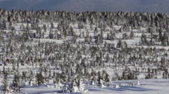 Alley With Fir Trees in the Snowy Mountains Stock Footage