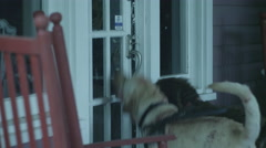 Watch dogs barking outside house door on porch Stock Footage