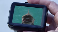 Person holding camera and watching shark video Stock Footage