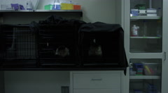 Monkeys kept in different cages at veterinary clinic Stock Footage