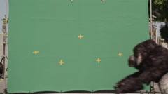 Fake gorilla walking against green background in zoo Stock Footage