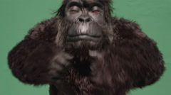 Fake gorilla making hand gestures against green background in zoo Stock Footage