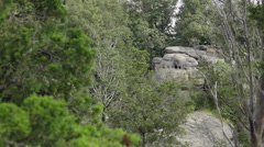 Large Boulders in a Forest Stock Footage