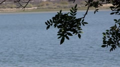Shallow depth of field view of leafy branch with bay behind. Stock Footage