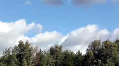 Windy weather in the forest. Stock Footage