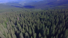 Aerial flying over forest in mountains Stock Footage
