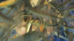 Close-up shot foot in aquarium with fish. Spa pedicure and treatment Stock Footage