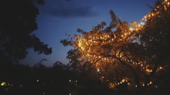 Decorated with lamps natural tree at evening sky Stock Footage