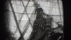1948: in a large festival, some elephants and several standard-bearers  Stock Footage