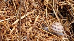 Crawling snail closeup Stock Footage