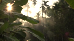 Cutaway Malaysia Sunray In Forest Stock Footage