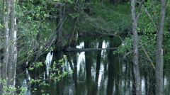 View of trees reflected in smooth surface of pond Stock Footage