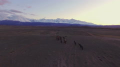 Horses running along the mountain steppes, aerial Stock Footage