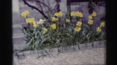 1952: a scene of a garden with pretty flowers moving in bloom with no grass in Stock Footage