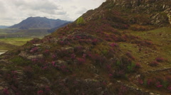 Riotous bloom in the mountains, rhododendron, aerial Stock Footage