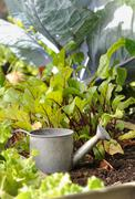 Watering can in a patch Stock Photos
