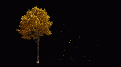 Blowing on the wind European autumn yellow tree isolated with alpha Stock Footage