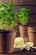 Green basil sprouts Stock Photos