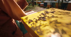 Beekeeper in overalls serving hive with bees Stock Footage