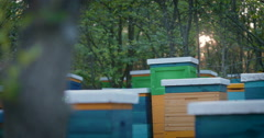 View of the hive bees Stock Footage